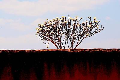 Photograph - African Tree Blooming 04 by Dora Hathazi Mendes