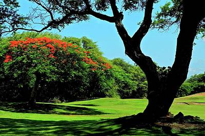Photograph - African Tulip Tree At Kahili by Kirsten Giving