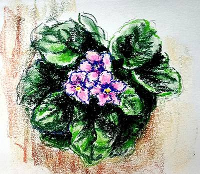 Drawing - African Violet. Pink by Hae Kim