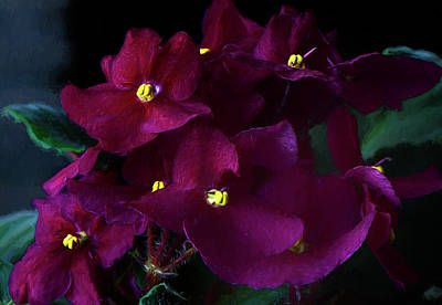 Photograph - African Violets Photo Art by Sharon Talson