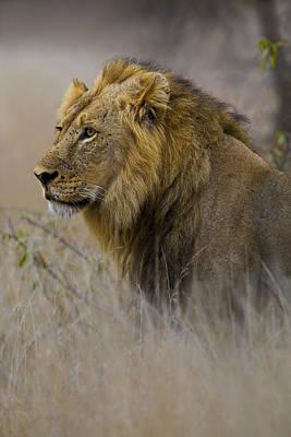 African Warrior Original by Basie Van Zyl