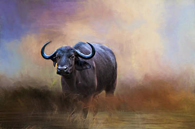 Photograph - African Water Buffalo by Maria Coulson