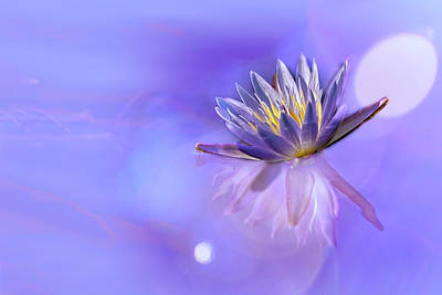 Photograph - Waterlily Bokeh by Kay Brewer