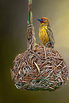 Photograph -  Weaver Nest by Maria Coulson