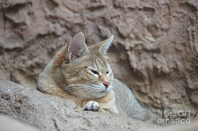 Photograph - African Wild Cat by Maria Urso