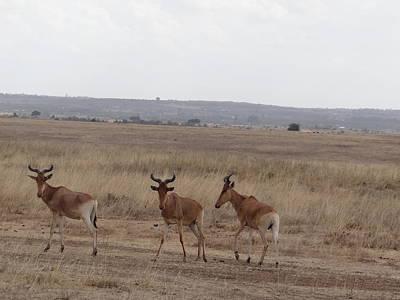 Exploramum Wall Art - Photograph - African Wildlife 3 by Exploramum Exploramum