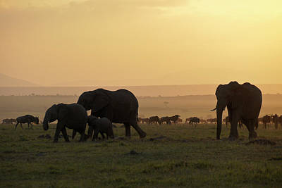 Photograph - African Wildlife At Sunrise by Michele Burgess