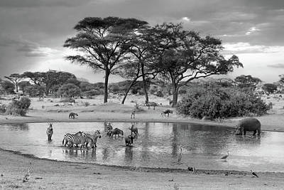 Photograph - African Wildlife At The Waterhole In Black And White by Gill Billington