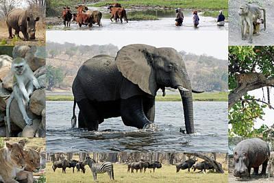 African Wildlife Montage - Elephant Art Print by Robert Shard