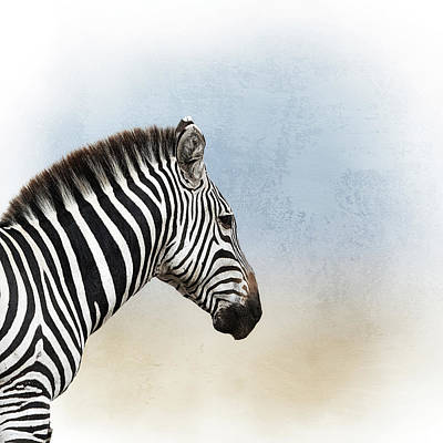 Photograph - African Zebra Closeup Square by Susan Schmitz