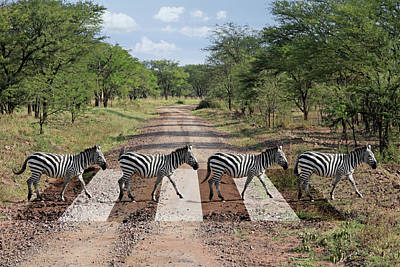 Photograph - African Zebra Crossing by Gill Billington