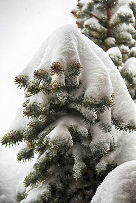 Photograph - After A Heavy Snow by Tatiana Travelways
