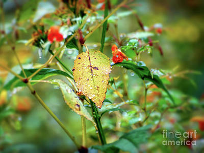 Photograph - After An Autumn Rain by Kerri Farley