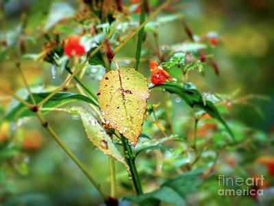 Photograph - After An Autumn Rain by Kerri Farley