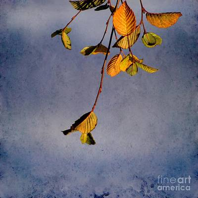 Photograph - After Summer Leaves by Aimelle