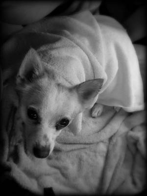 Little Dogs Photograph - After The Beach by Mandy Shupp
