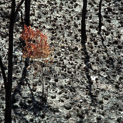 Photograph - After The Bushfire by Rick Piper Photography
