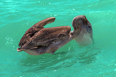 Royalty-Free and Rights-Managed Images - After the Dive Southern Most House Key West by Betsy Knapp