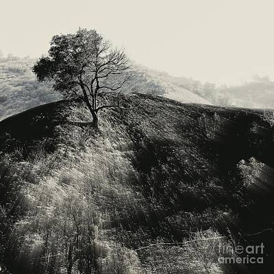 Photograph - After The Fire by Jenny Revitz Soper