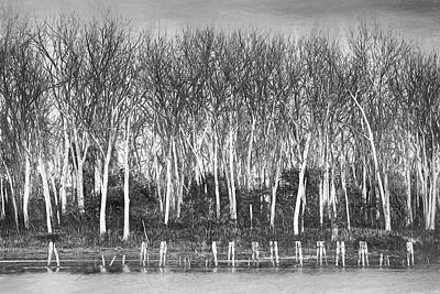 Photograph - After The Flood - Black And White by Nikolyn McDonald