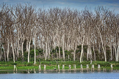 Photograph - After The Flood - Desoto National Wildlife Refuge by Nikolyn McDonald