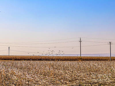Photograph - After The Harvest by Claudia M Photography
