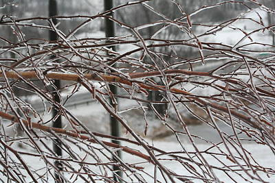 Photograph - After The Ice Storm by Aggy Duveen