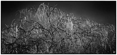 Photograph - After The Ice Storm by John Meader