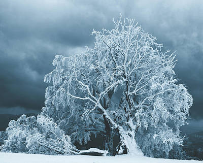 Photograph - After The Ice Storm by Pixabay