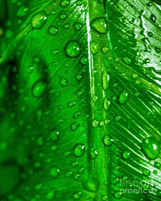 Photograph - After The Rain 12 by Ken Frischkorn