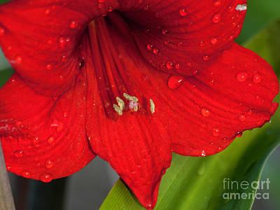Photograph - After The Rain 16 by Ken Frischkorn