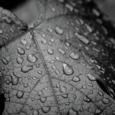 Photograph - After The Rain #2 by Michael Niessen