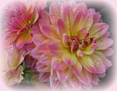 After The Rain - Dahlias Art Print