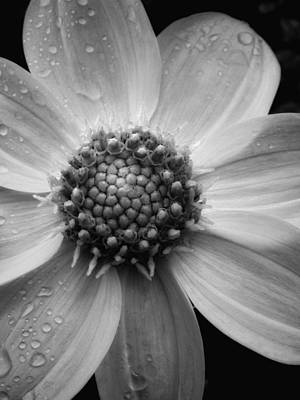 Photograph - After The Rain by Donna Blackhall
