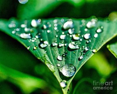 Photograph - After The Rain Eleven by Ken Frischkorn