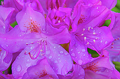 Photograph - After The Rain Expressionalism by Aimee L Maher Photography and Art Visit ALMGallerydotcom