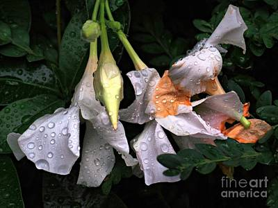 Photograph - After The Rain - Flower Photography by Miriam Danar