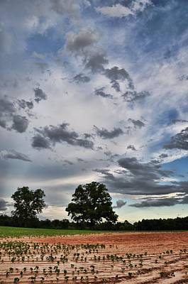 Photograph - After The Rain by Jan Amiss Photography