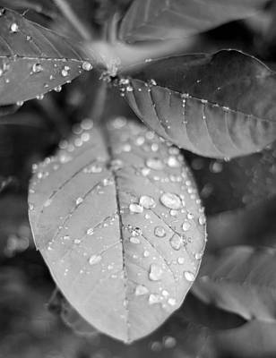 Photograph - After The Rain by Mechala Matthews