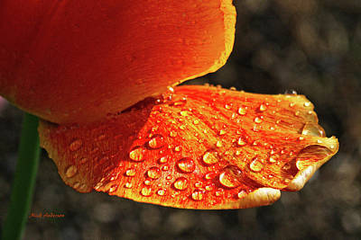 Photograph - After The Rain by Mick Anderson