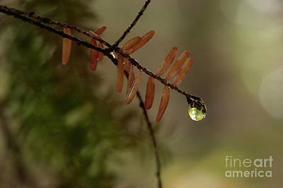 Photograph - After The Rain by Mike Eingle