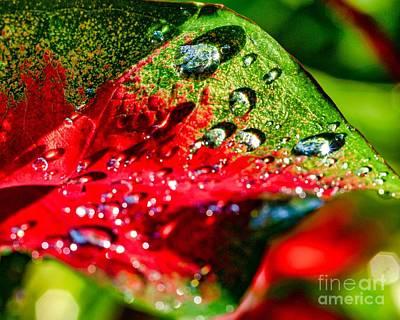 Photograph - After The Rain Ten by Ken Frischkorn