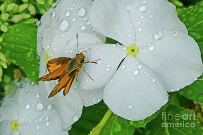 Photograph - After The Rain by Val Miller