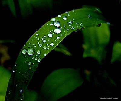 Photograph - After The Rain by Wesley Nesbitt