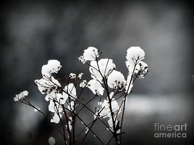Nova Scotia Photograph - After The Snow by Karen Cook