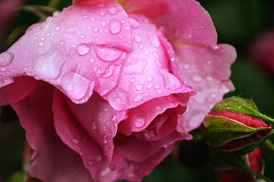 Photograph - After The Spring Rain by Rumiana Nikolova