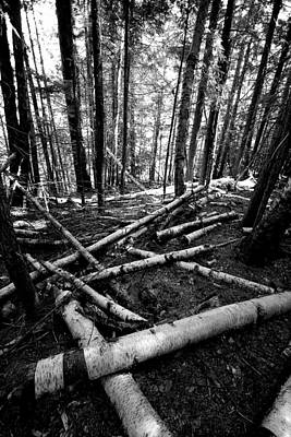 Forests Photograph - After The Storm by David Patterson