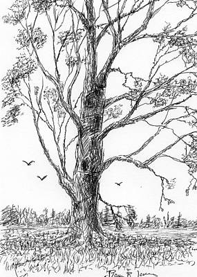 Drawing - After The Thaw by Barry Jones