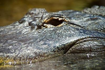 Photograph - After While Crocodile by Eric Tressler
