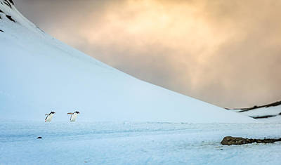 Afternoon Commute - Antarctica Penguin Photograph Art Print